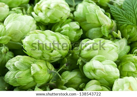Hop cones as a green background. - stock photo