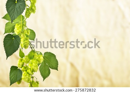 hop cones on the unfocused brown background - stock photo