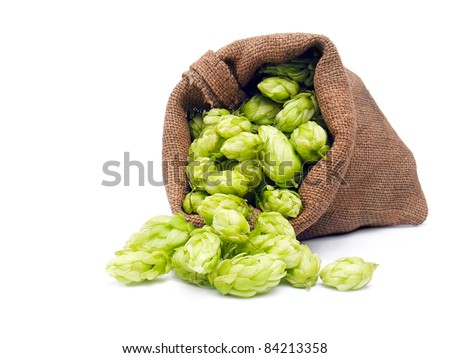 Hop in a burlap bag isolated on a white - stock photo