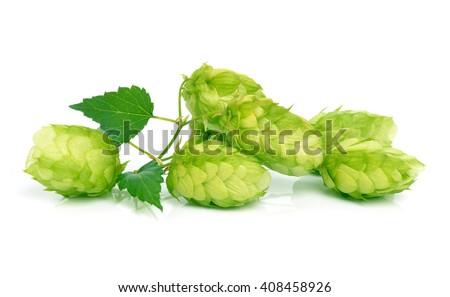 Hop isolated on white - stock photo