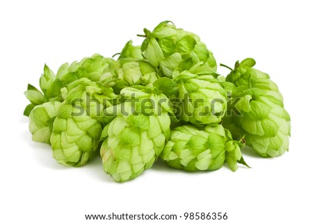Hops on a white background - stock photo