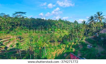 Horisontal landscape of famous rice terraces near Ubud in Bali, Indonesia - stock photo