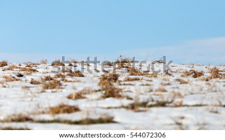 horizon of snow and blue sky