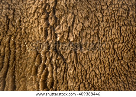 Horizontal close-up of bison hair, brown background with hairy texture, animal fur closeup,wisent - stock photo
