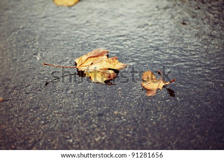 Horizontal color image of some brown and yellow autumn leaves laying on the ground on a cold rainy day. Peaceful image with a mix of warm vibrant colors and a cold feeling. - stock photo