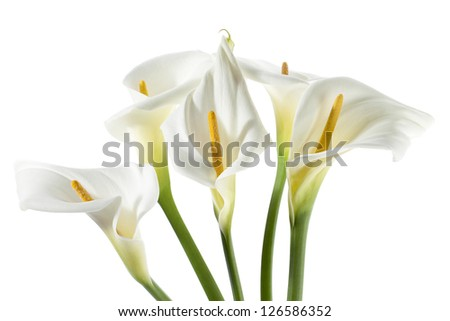 Horizontal image of a cropped bouquet of white calla lilies - stock photo