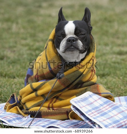 Horizontal image of a cute dog in a blanket