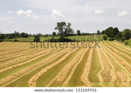 Horizontal image of rows of harvested crops - stock photo