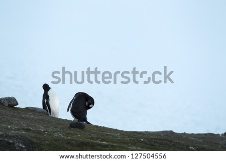 Horizontal image of two penguins at the top of the rock in the ocean - stock photo