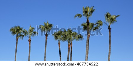 Horizontal Line Of California Palm Trees On Clear Blue Sky