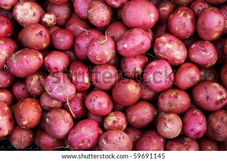 Horizontal photo of arrangement of just harvested small red potatoes - stock photo