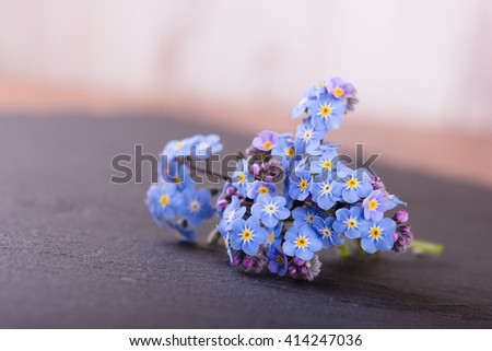 Horizontal photo of small flower (forget-me-not) with many little blooms and purple buds which is placed on black slate stone which is used as a plate. Background is light wooden wall. - stock photo