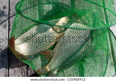 Horizontal shot of a green fishing cage with carps - stock photo