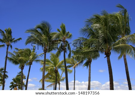 Horizontal shot of palm trees from beneath