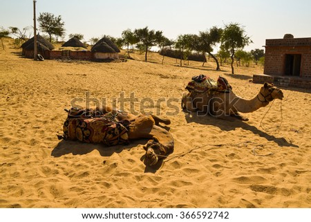 Horizontal shot of two camels with their riding saddles on. They are resting after a ride through the desert. This was shot in the Thar Desert in India.  - stock photo