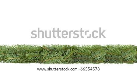Horizontal strip made of spruce branches on white. - stock photo