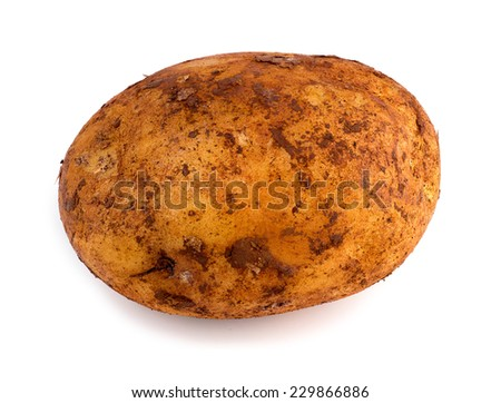Horizontal view of freshly picked russet potato isolated against white - stock photo
