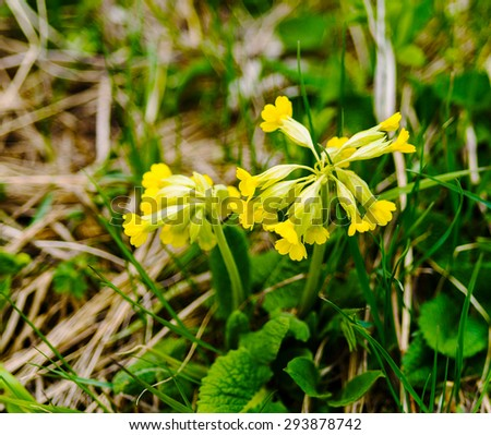Horizontal yellow mountain flower bokeh background backdrop - stock photo