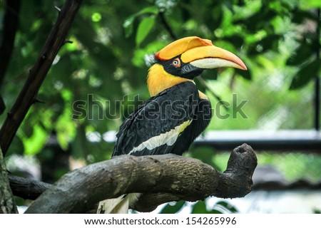 Hornbill - stock photo