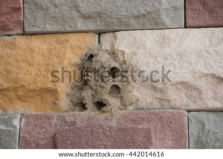 Hornet's nest built on a stone wall. For instance children living at pupate. After the ball was flying standby to fly out to leave the nest. - stock photo