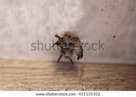 Hornets and Larva on Nest - stock photo