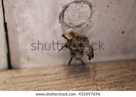 Hornets on Nest - stock photo