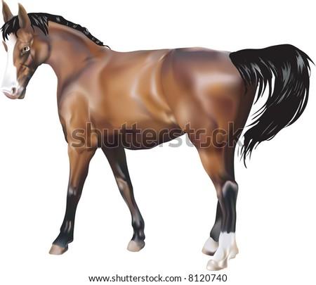 Horse. A photorealistic illustration of a horse. - stock photo