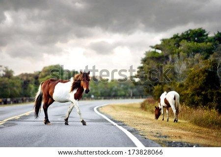 Horse and baby - stock photo