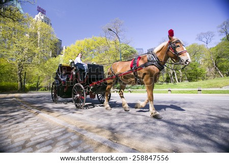 Horse and carriage drives through Central Park Manhattan, New York City, New York - stock photo