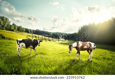 Horse and cow pasture on a glade - stock photo