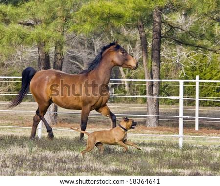 Horse and dog running - stock photo