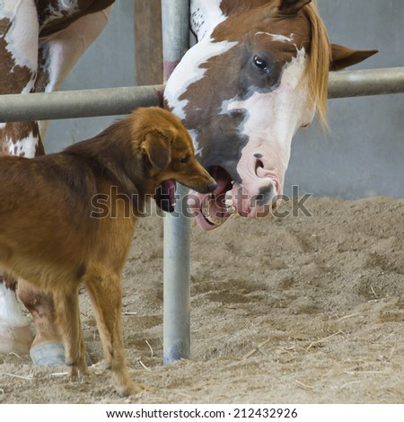 Horse and dog take break and playful - stock photo
