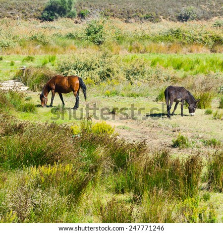 Horse and Donkey Grazing on Green Pasture in Portugal - stock photo