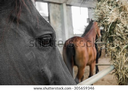 Horse and feeding in the farm.