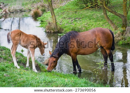 Horse and foal on pasture in the village - stock photo
