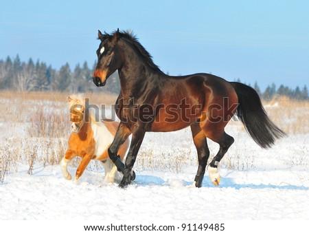 horse and pony play - stock photo