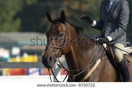 horse and rider at local horse show - stock photo