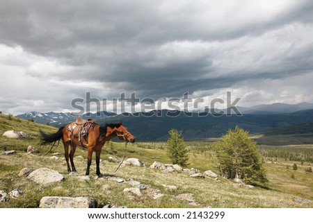 Horse and Sayan mountain landscape