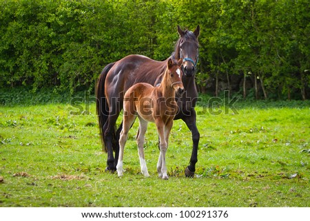 Horse and the foal on the meadow - stock photo