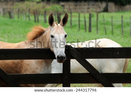 Horse at Fence - stock photo