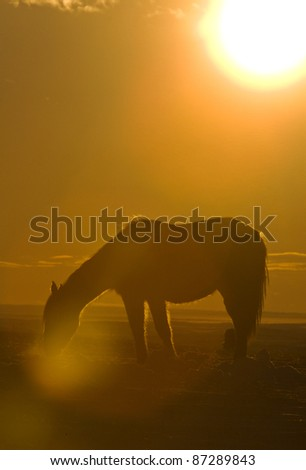 Horse at Sunset grazing in a meadow