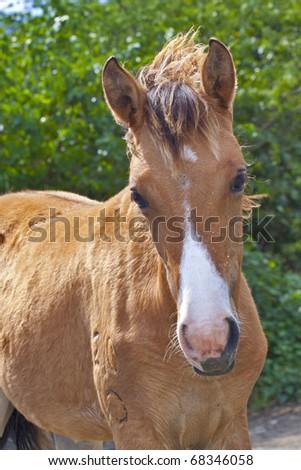horse & beach - stock photo