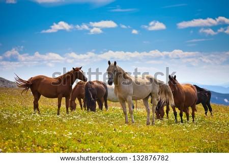 Horse behavior on mountain peak - stock photo