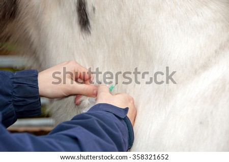 Horse being injected into the neck - stock photo