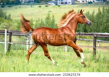 Horse cantering - stock photo