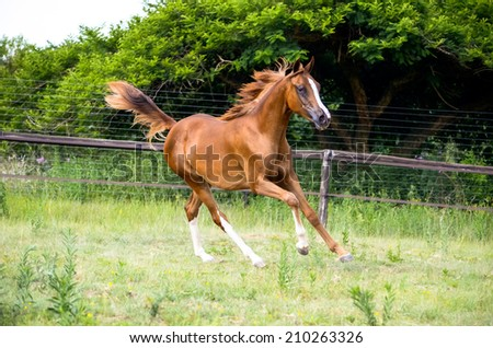 Horse cantering in a green grassy paddock - stock photo