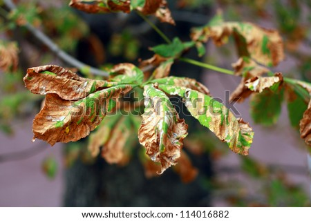 Tree Diseases Stock Images Royalty Free Images Amp Vectors