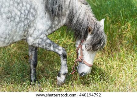 Horse close up - stock photo