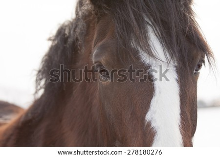 Horse, close up eye contact. - stock photo