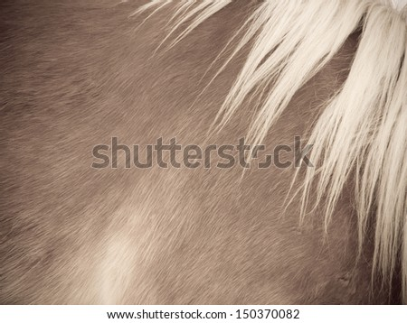 horse detail 95, fur and mane, side/front view - stock photo